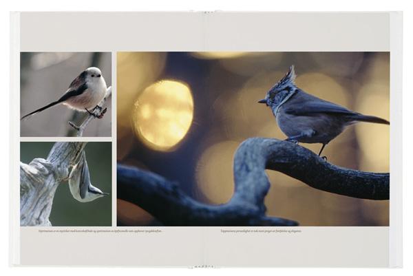 Fugle-oppslag-2ny